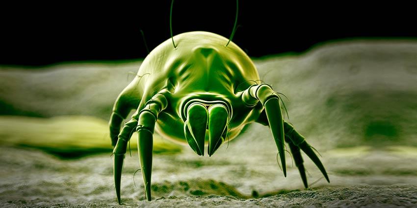 укус насекомого