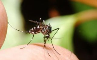 Инсектная аллергия
