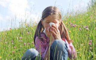 Респираторный аллергоз — симптомы и лечение