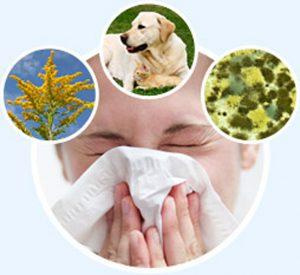 Виды аллергенов и их классификация